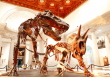 Zoom With the Dinosaurs at Natural History Museum Sept. 22