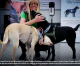 Finland deploys coronavirus-sniffing dogs at major airport