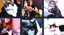 The Innovative 'Kitten Lounge' Opens in West Hollywood This Friday